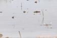 Rizière en eau_P.Daniel – PNR Camargue